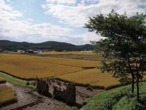 yamadas-rice-fields-978738_1280